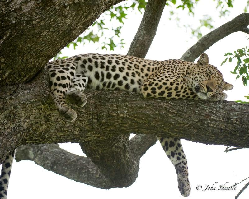 Leopard - Jan 1st, 2012