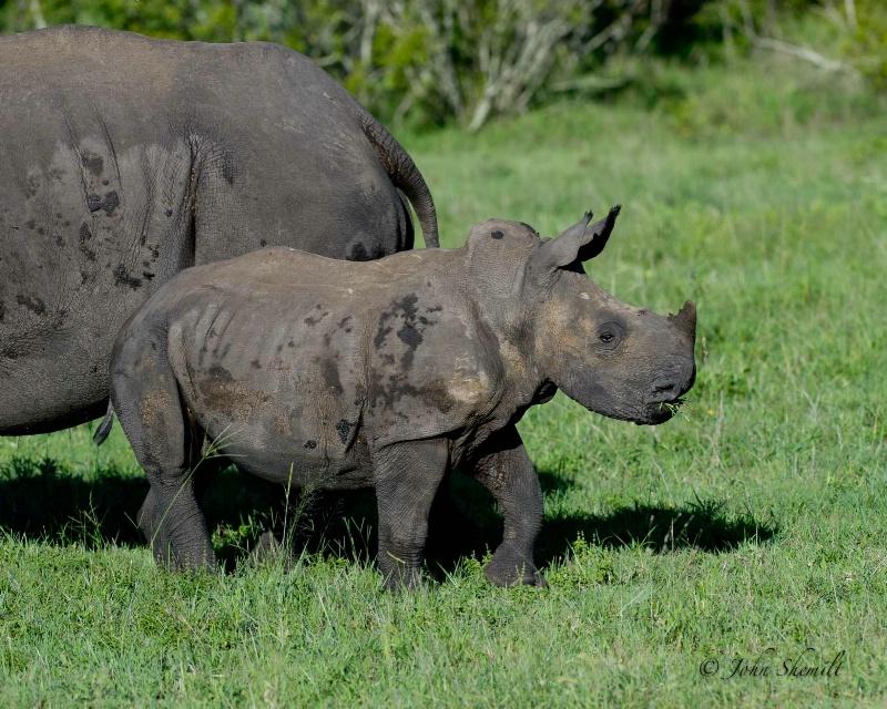 Rhinocerous - Dec 27th, 2011