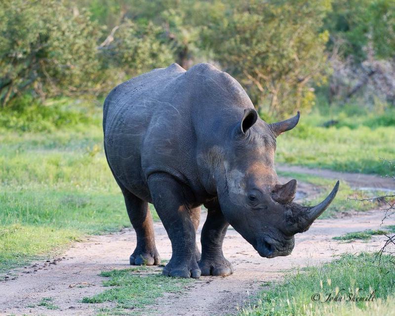 Rhinocerous - Dec 3oth, 2011