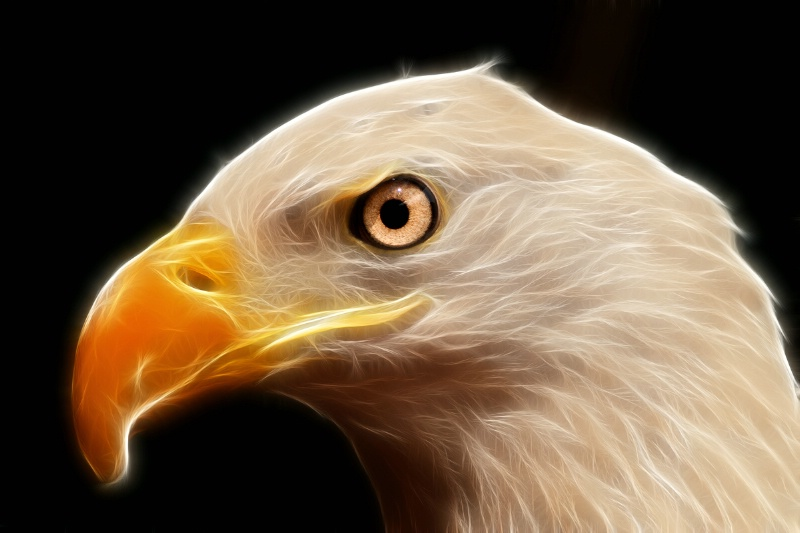 BG Bald Eagle--Fractalius