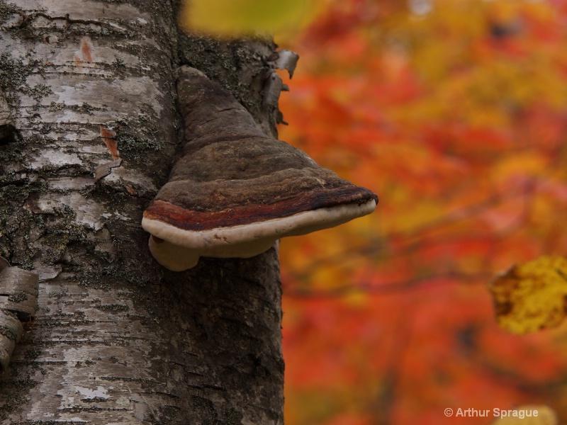 Fall Fungus