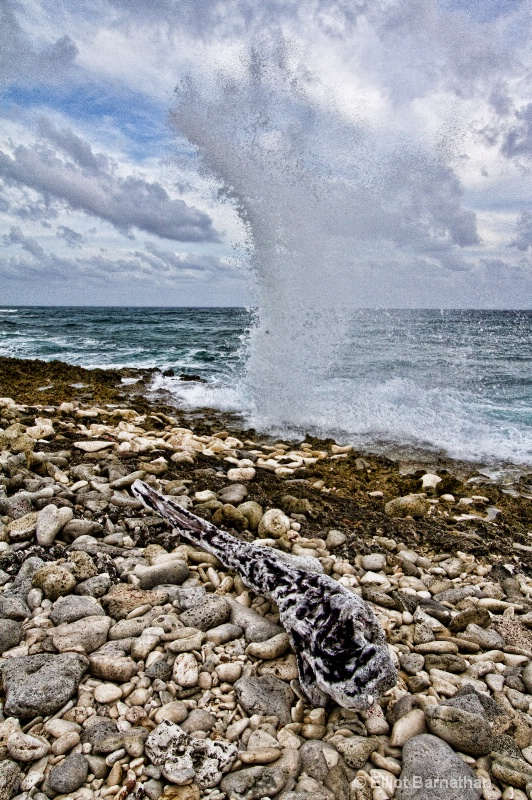 The Blowholes 3