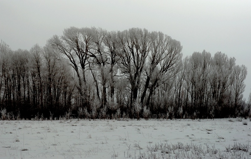 Hoarfrost Across the Valley