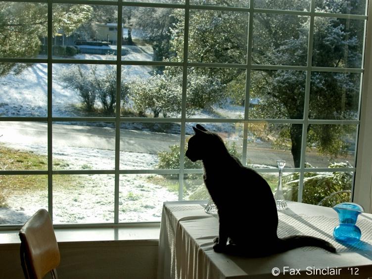 Morning Scene w/ Cat
