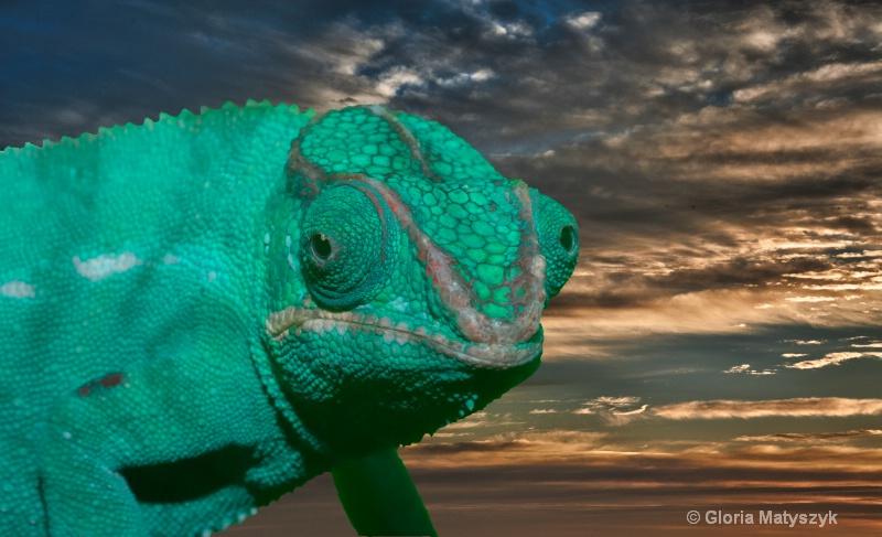 Chameleon on a sunrise photo