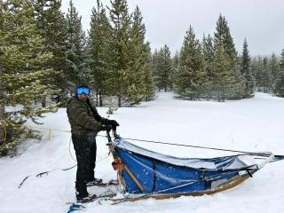 Bobi and the dog sled