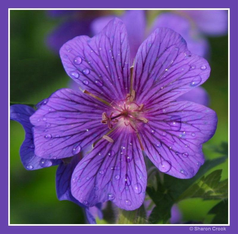 Purple Reigns!