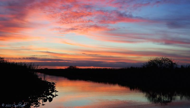 Everglades Evening