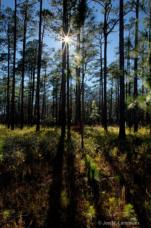 Afternoon in the Pines