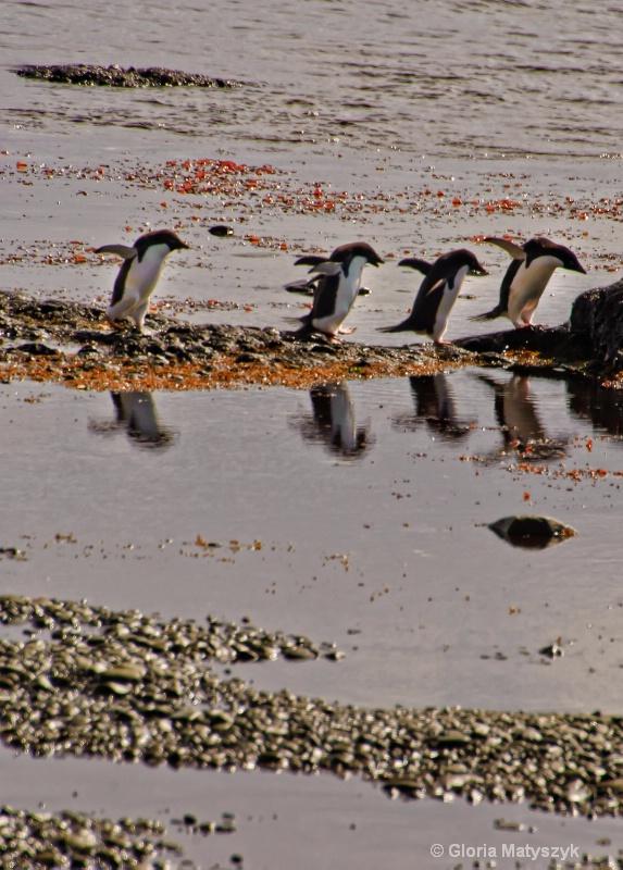 Penguins in Devil's Island, Antarctica
