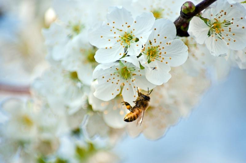 A Pollinator