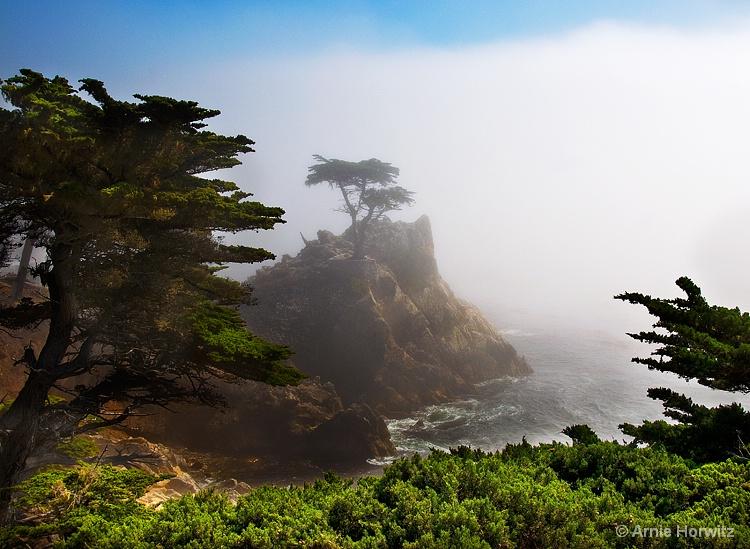 Lone Cypress in Mist
