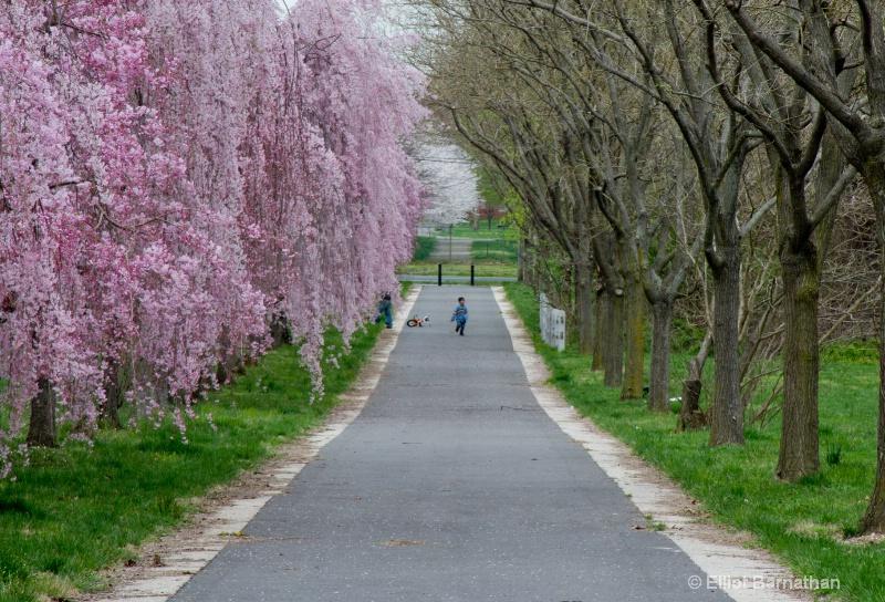 Spring in Philadelphia 5