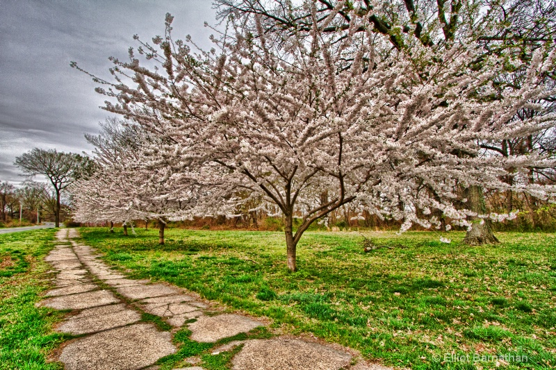 Spring in Philadelphia 3