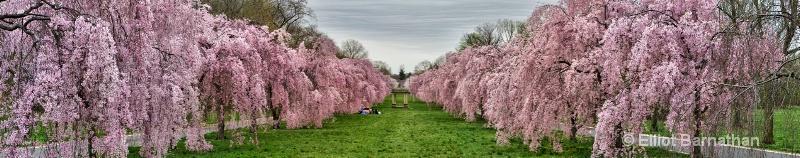 Spring in Philadelphia 1