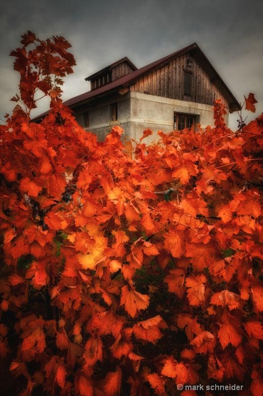 Amador Autumn