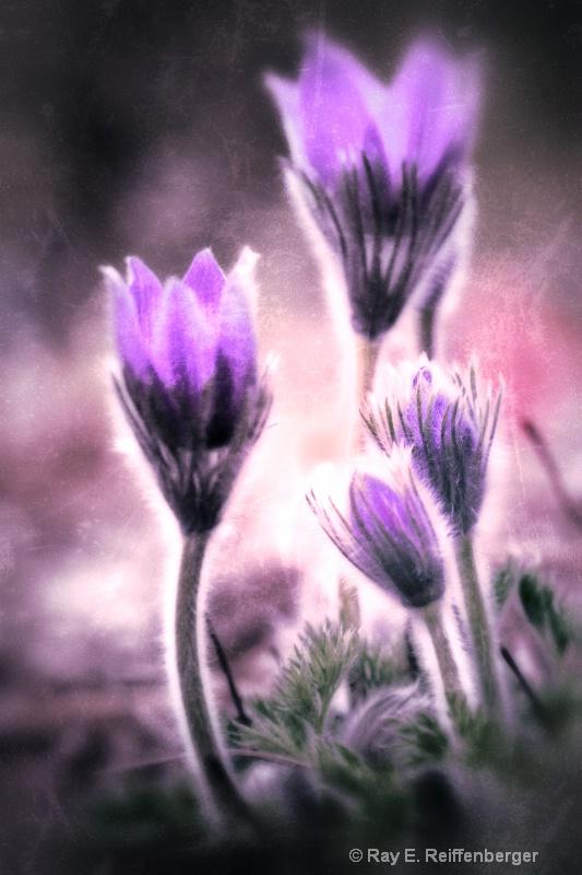 img 3042 snapseed flower 12