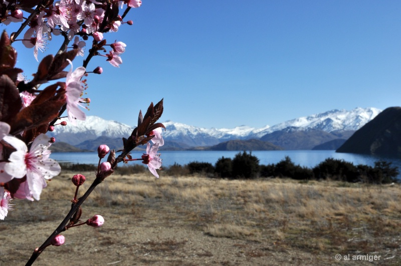 Spring at Lake Wananaka Central Otago New Zealand