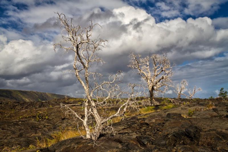 Lava Tree Parade