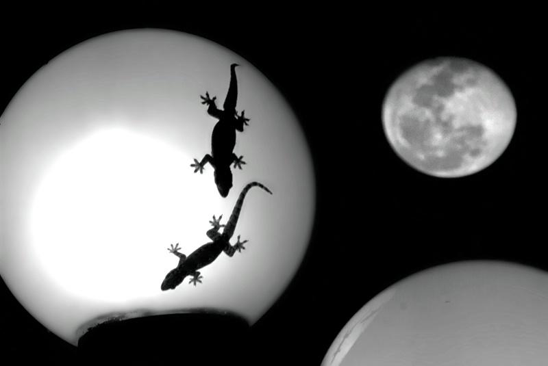 Gecco Moon