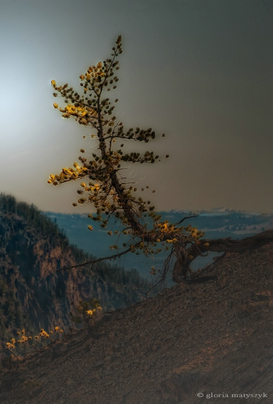 Solitary Tree, Yellowstone National Park, USA