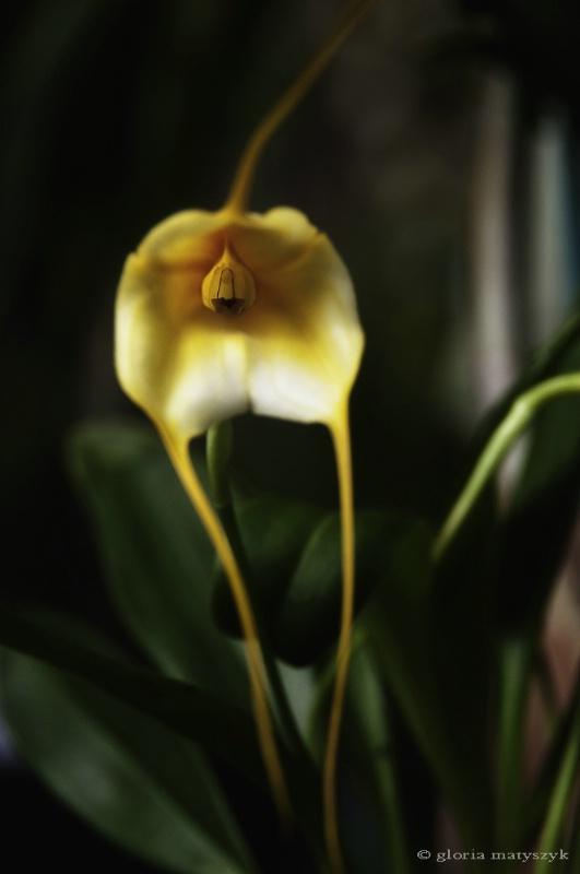 Orchid, Sunken Gardens, St. Petersburg, FL