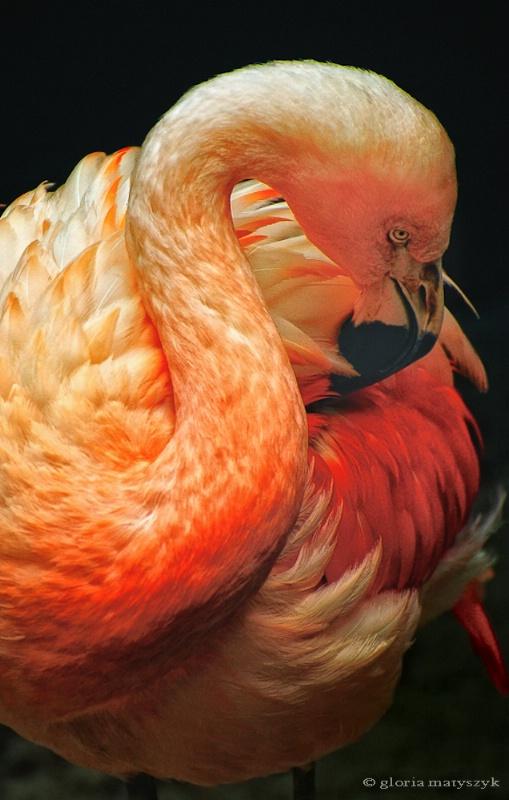 Pink Flamingo, Tampa, FL