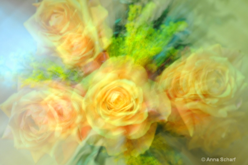 The beauty of roses 2