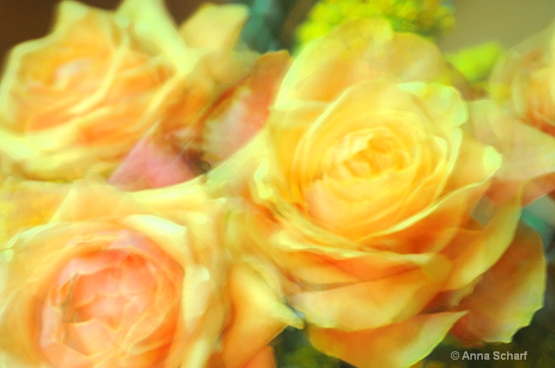 The beauty of roses 3