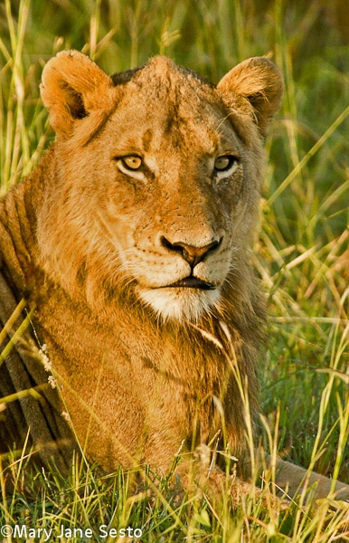 Y.M.Lion2, South Africa