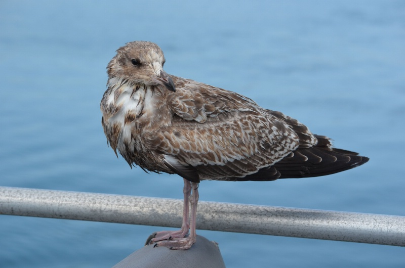 Fine feathered sea goer
