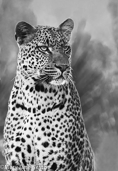 B&W Leopard4, South Africa