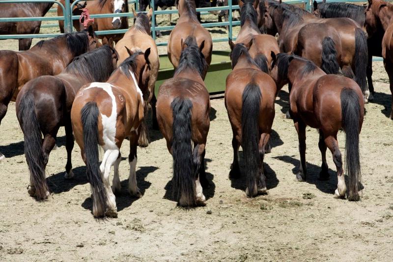 Buckin Horses