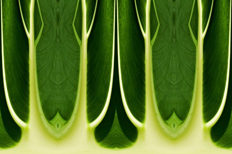 Nat Harbor Leaf--Kaleidoscope + Polar Cord.
