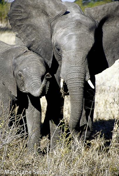 Ele & Baby2, South Africa