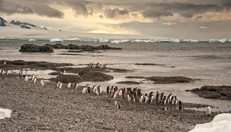 Adelie penguins on the beach in Antarctica
