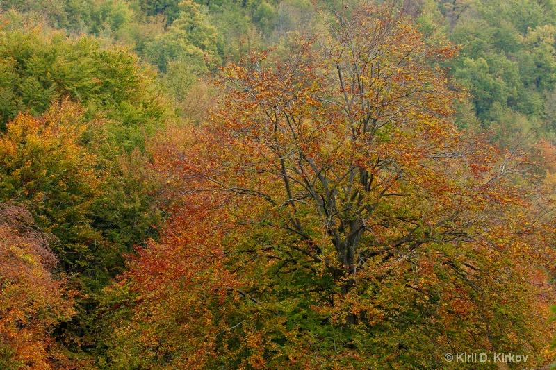"""""""Autumn Part2"""""""