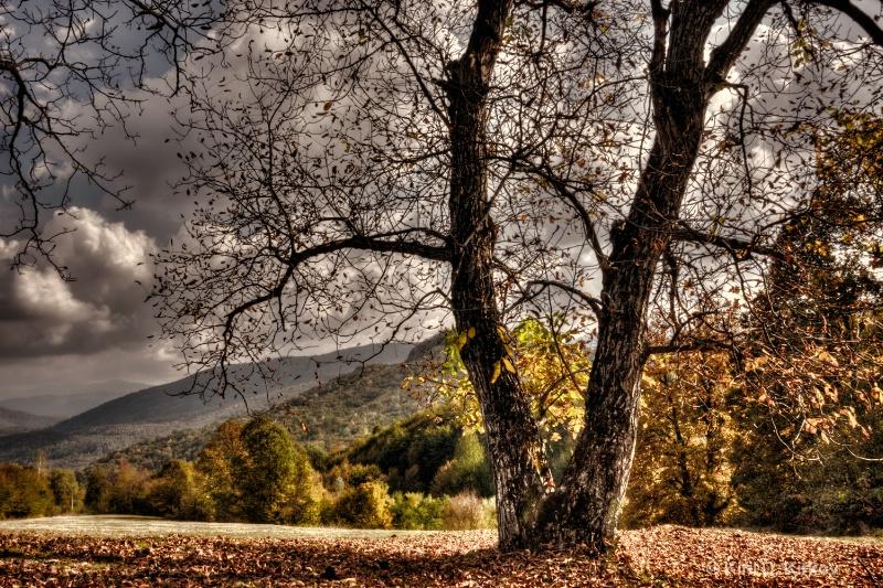 """""""Autumn Part1"""""""