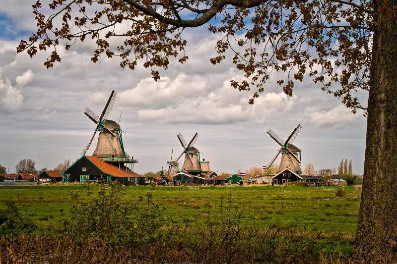 Zaamdam Windmills