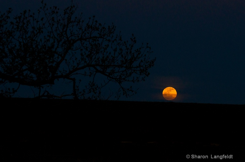 May 2012 Super Moon just escaping the horizon