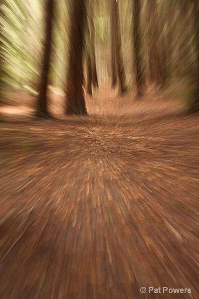 Racing Through the Redwoods