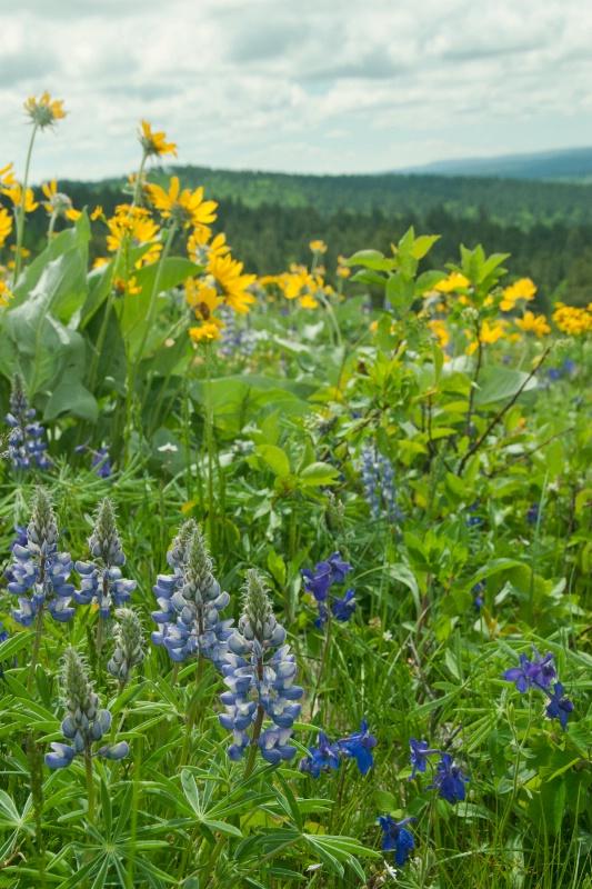 Wildflowers of Cement Ridge
