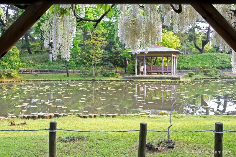park bench under wisteria