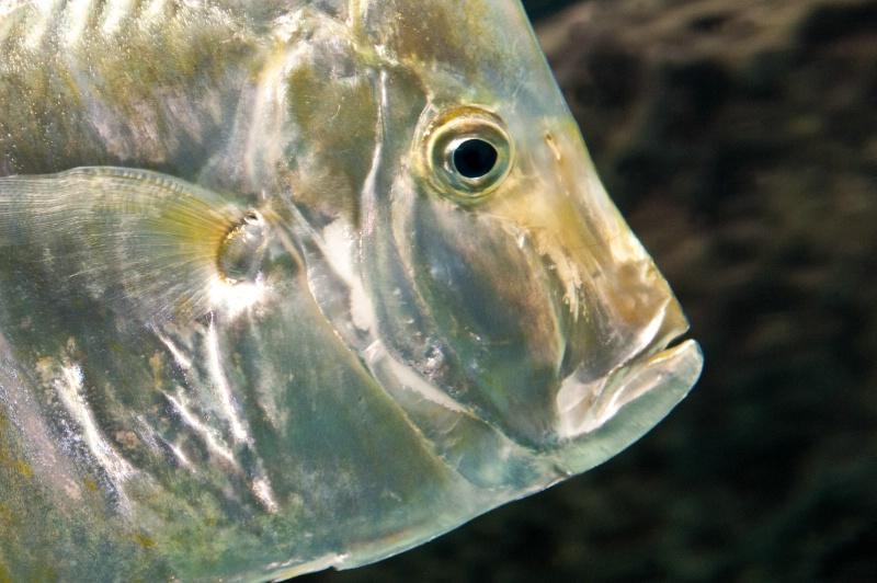 Silver Fish--Atlanta