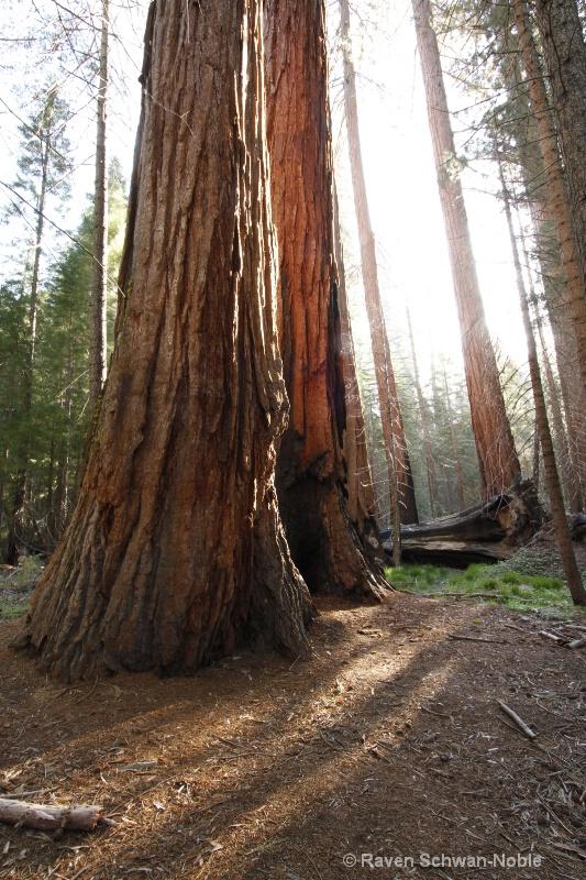 Sequoia 051912 068