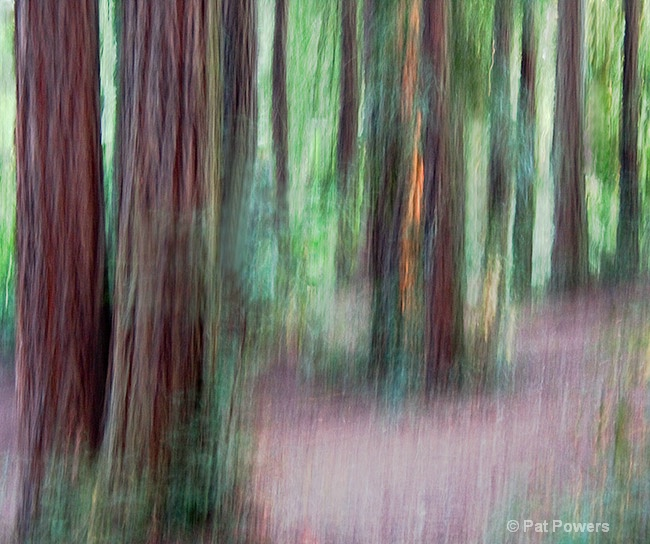 Oakland Redwoods