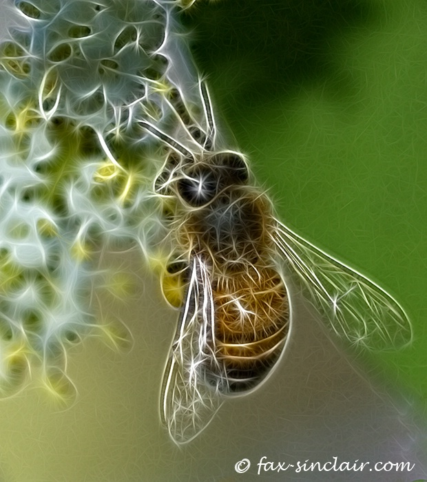 Bee Magic