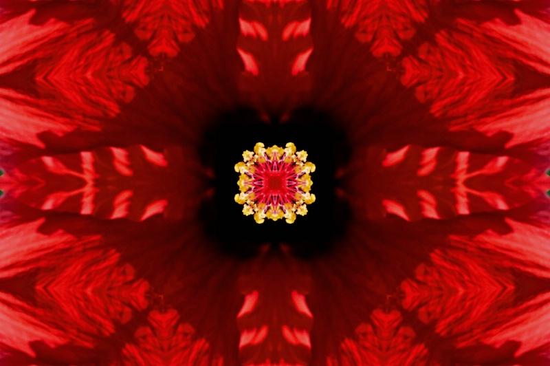 Williamsburg Flower--Kaleidoscope #2