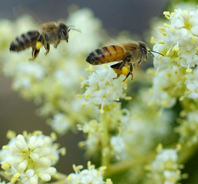 bee race sm