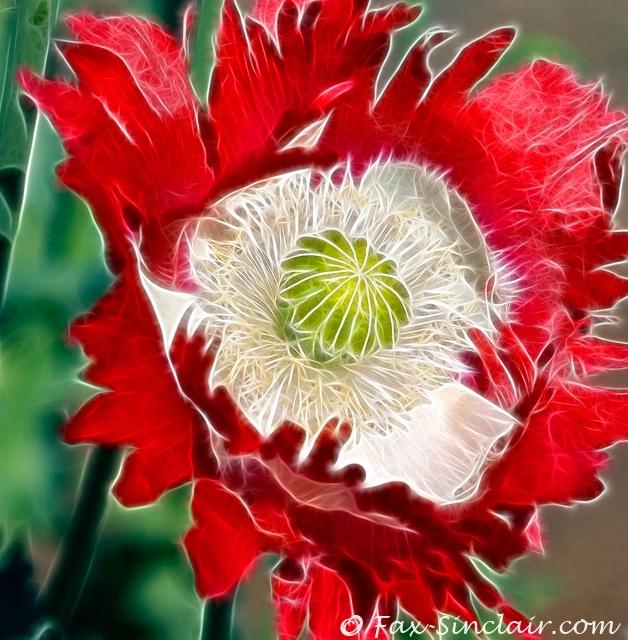 Poppy Enfleuration